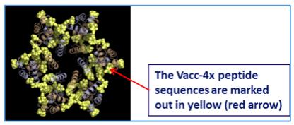 vacc-4x-HIV-Capsid-p24Hexamer
